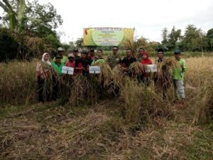 Danramil 06 Tanah Merah Bersama Petani Panen Raya Padi