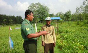 Upsus, Babinsa Socah Bangkalan, dan Petani Monitoring Kesuburan Tanaman Kedelai