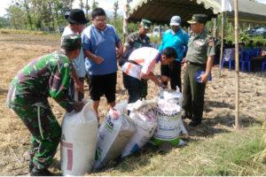 Panen Raya Dan Sergap Di Kecamatan Slaung Ponorogo 4