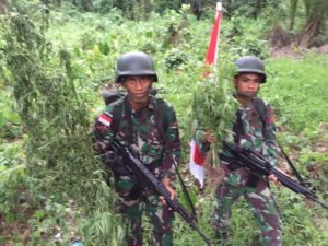 B. 08 Satgaspamtas Yonmek 516 CY Temukan Ladang Ganja Di Perbatasan RI - PNG (5)