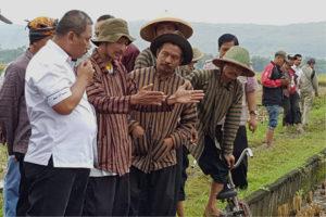 Staf Ditjen Tanaman Pangan Nasional Tinjau Panen Raya Padi  Pupuk Organik  Di Tulungagung 1
