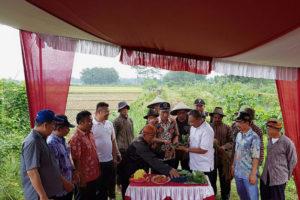 Staf Ditjen Tanaman Pangan Nasional Tinjau Panen Raya Padi  Pupuk Organik  Di Tulungagung 2