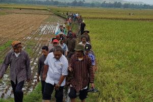 Staf Ditjen Tanaman Pangan Nasional Tinjau Panen Raya Padi  Pupuk Organik  Di Tulungagung 4