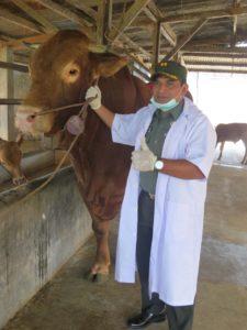 dandim-0814-jombang-cek-kesehatan-hewan-qurban-3