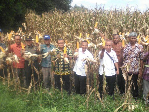 17-11-2016-pertanian-papar-4