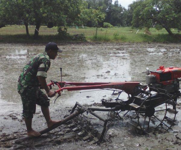 4-sukseskan-swasembada-pangan-babinsa-bangkalan-intens-bantu-petani-ke-sawah-g